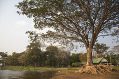 Large trees near water sources Royalty Free Stock Photo