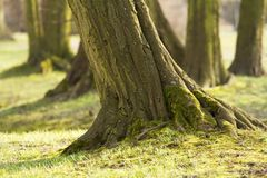 Large trees in the park 1 Royalty Free Stock Photos