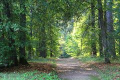 Trees in park three. Large trees and a path in park in sunlight stock photo