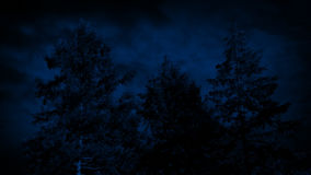 Large Trees Swaying On Stormy Night. Big trees at night sway in the wind stock video footage