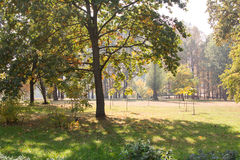 Large trees with yellow leaves and green fields. Early autumn. Early autumn in the city park. Large trees with yellow leaves and green fields. Landscape Stock Photography