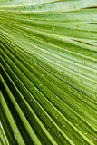 Large tropical green leafs wet with raindrops Royalty Free Stock Photos