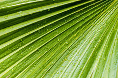 Large tropical green leafs wet with raindrops Stock Photography