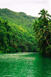 Large tropical river with green water Royalty Free Stock Photos