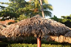 Large tropical Straw sunshade in holiday resort Stock Photography