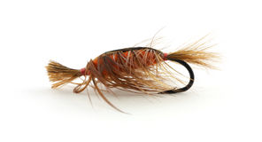 Large trout fly-fishing fly Stock Image
