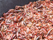 Large tub full of live crawfish Royalty Free Stock Photo