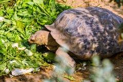 Large turtle Royalty Free Stock Photos