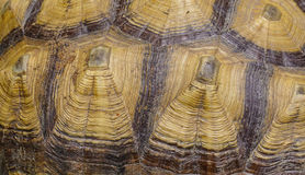 Large turtle shell texture Stock Images