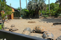 Large turtle at the zoo. Tortoise from Mauritius turtle zoo large earthen shell brown mammals stock photo
