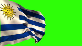 Large uruguay national flag blowing. On green screen background stock video