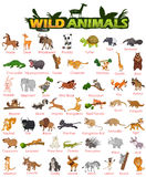 Large variété d'animaux sauvages Illustration de Vecteur
