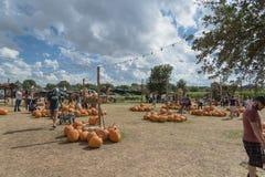 Large variété de décoration de potirons à la ferme locale dans le Texas, Amer photos stock