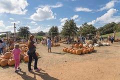 Large variété de décoration de potirons à la ferme locale dans le Texas, Amer photos libres de droits