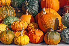 Lots of colorful decorative pumpkins Royalty Free Stock Images