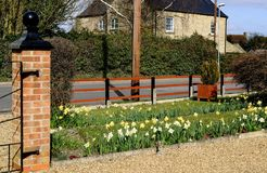 Springtime flowers seen at the front of a rural house in England. A large variety of daffodils can be seen in this springtime scene, also showing the entrance Stock Photo