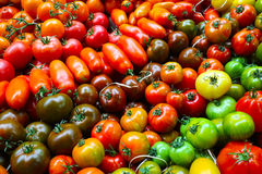 Types of tomato in colourful layers Stock Photography