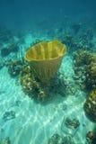 Large vase sponge Ircinia campana in Caribbean sea. Underwater life, large vase sponge, Ircinia campana, in the Caribbean sea Royalty Free Stock Photography