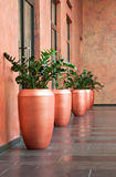 Large vases. Fragment of the interior with large vases with plants Royalty Free Stock Photo