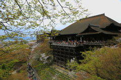 The large veranda of Kiyomizu-dera. The large veranda of Kiyomizu-dera (Kiyomizu Temple) during cherry blossoms season in Kyoto, Japan Stock Photo