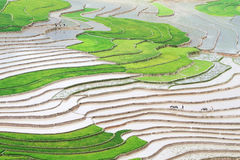 Large view of the rice fields before the rice planting season Stock Image
