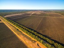 Large vineyard in Kingston on Murray. Large vineyard in Kingston on Murray, Riverland, South Australia - aerial view Royalty Free Stock Photography