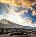 Large vineyards near volcanic mountains Stock Photo