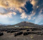 Large vineyards near volcanic mountains Royalty Free Stock Image