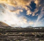Large vineyards near volcanic mountains Stock Image