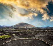 Large vineyards near volcanic mountains Royalty Free Stock Images