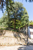 Large walnut tree in the Troyan Monastery, Bulgaria royalty free stock images