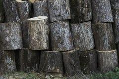 Large warehouse of wooden stumps stock image