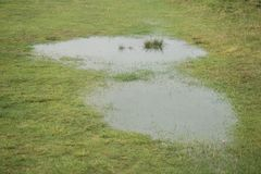 Large water puddles. On a green meadow Royalty Free Stock Images
