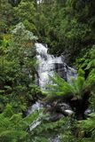 Large waterfall over rocks in lush rainforest royalty free stock image