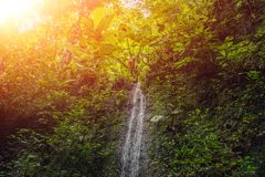 Large waterfalls in green tropical forest focus on waterfall Bali with sunlight. Large waterfalls in green tropical forest focus on waterfall. Bali with sunlight stock photo