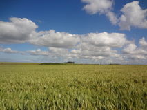 Large wheat field Royalty Free Stock Image
