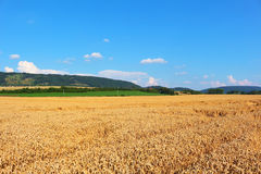 Large wheat fields in countryside Stock Photo
