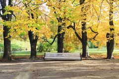 Large white bench under tall trees in autumn Royalty Free Stock Photos