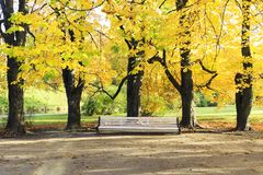 Large white bench under tall trees in autumn Royalty Free Stock Images