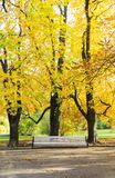 Large white bench under tall trees in autumn Stock Photos