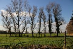 Large white clouds in blue sky and trees over the meadows of the Zuidplaspolder in Moordrecht,. Large white clouds in blue sky over the meadows of the Royalty Free Stock Photography