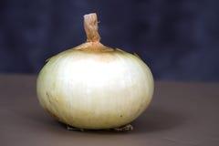 Large White Onion Stock Photography