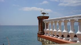 A large white Seagull sitting on the railing of the waterfront. A large white Seagull sitting on the railing of the waterfront against the sea landscape stock footage