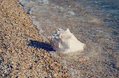 Large white seashell on the seashore. The large white seashell on the seashore stock image