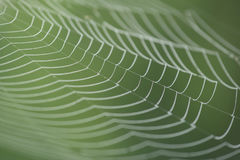Large white spider web in dew in the morning on a green summer background Stock Photo