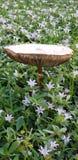 Large wild mushroom royalty free stock photo