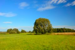 Large willow on a green meadow stock image