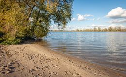 Large willow shrub on a sandy beach of the river. Large willow shrub on a sandy beach of a Dutch river on a sunny day in the fall season stock images
