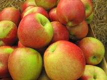 Large wonderful apples. Red, large, organic apples for sale at the market royalty free stock images