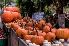 Large wooden crates of pumpkins and squash Royalty Free Stock Photos